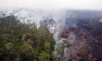 Sejak Januari 248 Hektare Lahan Terbakar di Riau