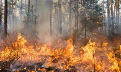 Polda Riau Tahan 8 Orang Tersangka Karhutla