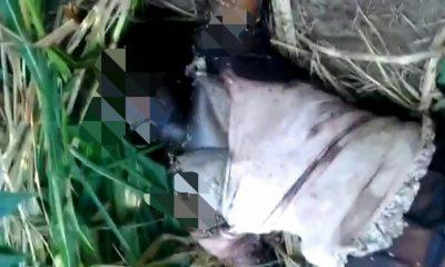 Penemuan Mayat Wanita Kondisi Membusuk di Kebun Jagung Bikin Geger Warga Karanganyar