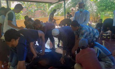 Anggota DPRD Labusel BJ Ginting Sembelih Hewan Qurban 1 Ekor Sapi